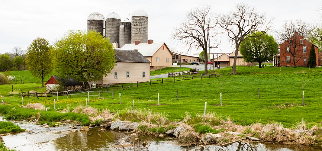Tubes protect freshly planted trees along a stream running through Oregon Dairy Farm in Lititz, in this file photo. In 2015, the farm was named a U.S. Dairy Sustainability Award winner. (Photo: Will Parson | Chesapeake Bay Program)