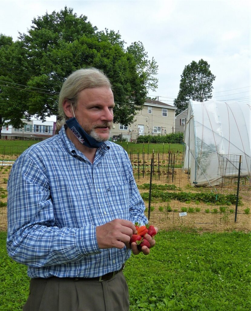 York Mayor Michael Helfrich enjoys a handful of strawberries during the farm tour. (Photo: Tim Stuhldreher)