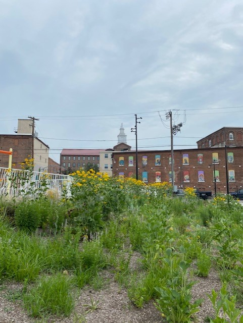 Native flowers with the Water Street Mission's murals in the background. (Photo: Olivia Smucker)